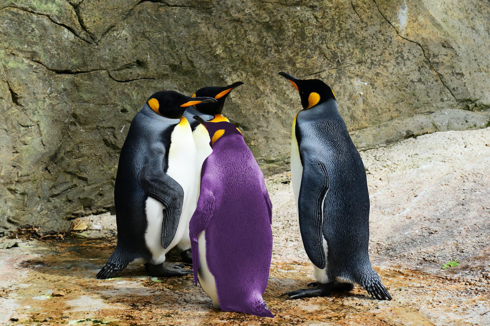 Penguins - one purple
